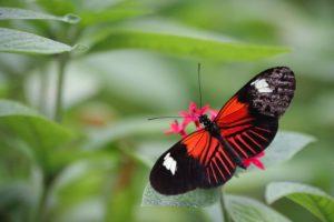 Butterfly on leaf by Ana Martinuzzi on Unsplash.